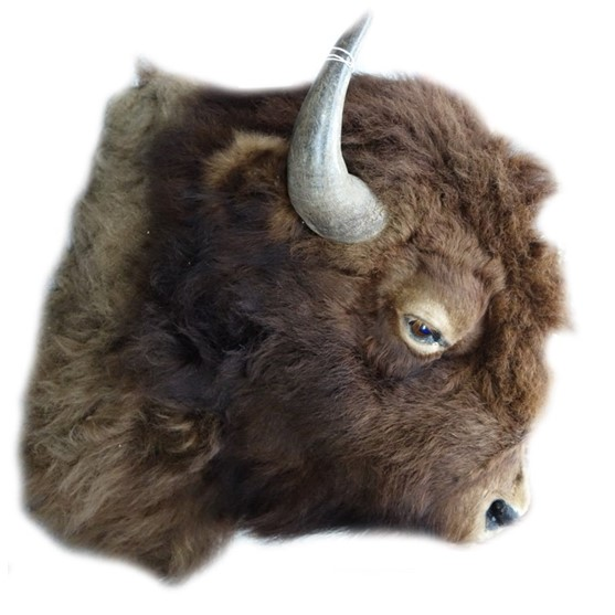Taxidermy; a head of a bison. 70cm... Image