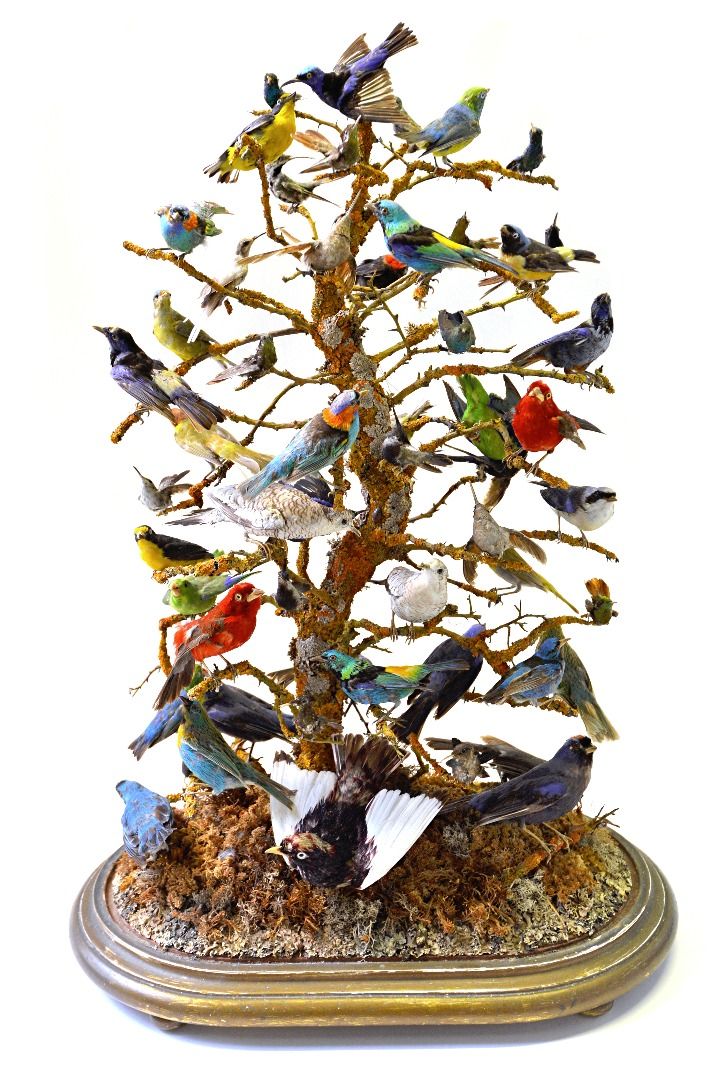 Taxidermy; approximately fifty stuffed... Image