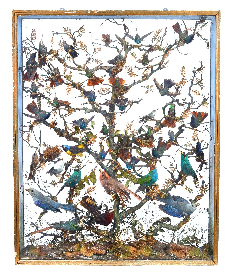 Taxidermy; a collection of forty exotic... Image