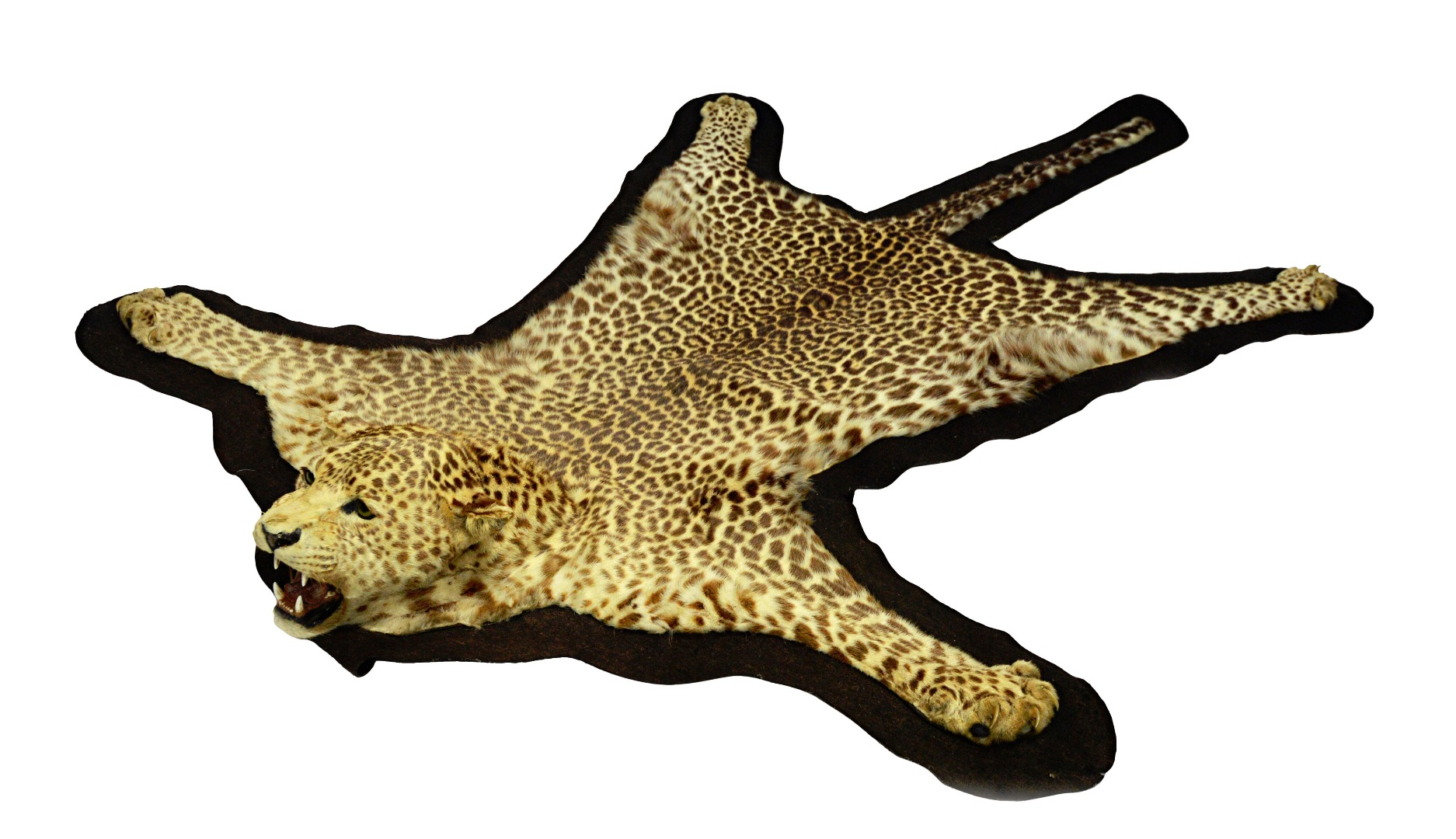 Taxidermy; a leopard skin rug, early... Image