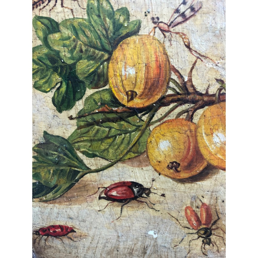 Follower of Jan Van Kessel I (Antwerp, 1626-1679), A fruiting branch with insects... Image