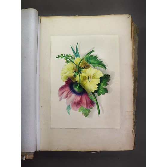 A 19th century portfolio containing a large collection of watercolours, pencil drawings and... Image